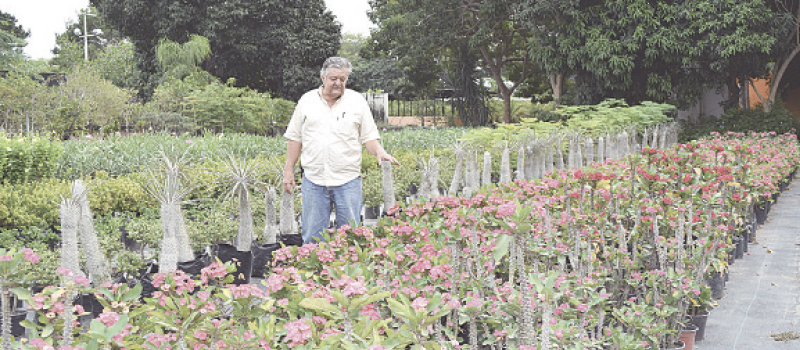 Diario de colima for 10 plantas de ornato